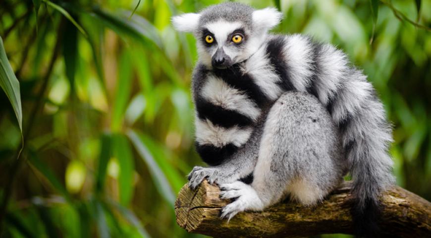 Faune et flore de Madagascar: Une biodiversité riche et endémique