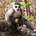Aires protégées : Un budget annuel pour leur conservation