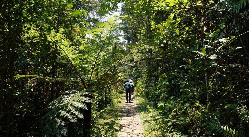 Masoala National Park : A wide tropical diversity