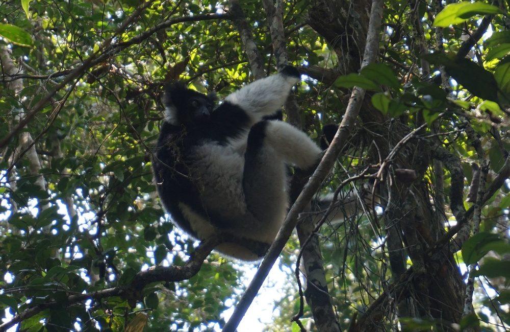 lemurs nosy be island