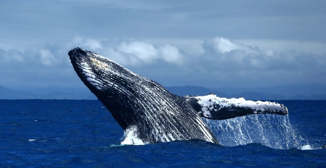pangalanes channel tour - sainte marie tour Whalewatching